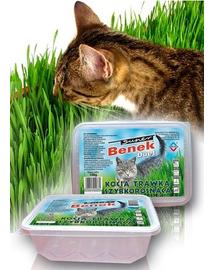 BENEK Gyors növekedésű macskafű, dupla tartály, válaszfallal
