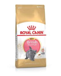 ROYAL CANIN BRITISH SHORTHAIR KITTEN - Brit rövidszőrű kölyök macska száraz táp 10 kg