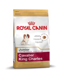 ROYAL CANIN Cavalier King Charles Junior 1,5 kg